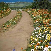 Caminho Florido